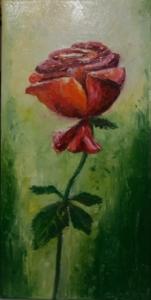 Roża czerwono-zielona