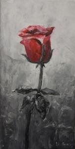 Roża czerwono-czarna
